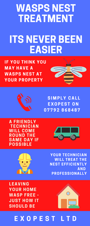 wasp nest treatment in middlesbrough